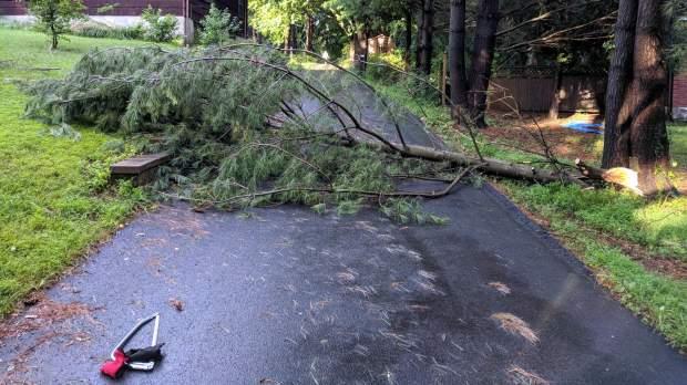 Driveway branch - as fallen