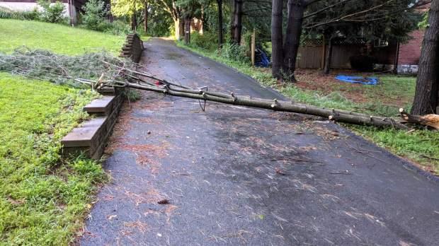 Driveway branch - trimmed