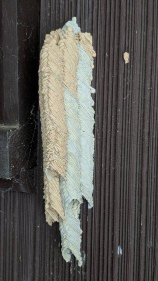 Organ Pipe Mud Dauber Wasp Nest - side view