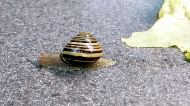 Snail - escaping