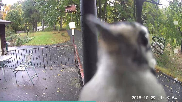 Screenshot_20181029-112307 - Downy Woodpecker at the Pan