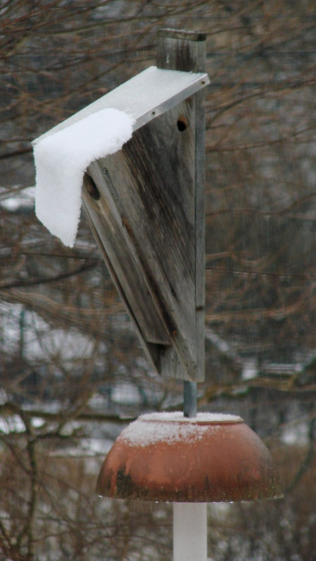 Bird Box - sliding snow sheet