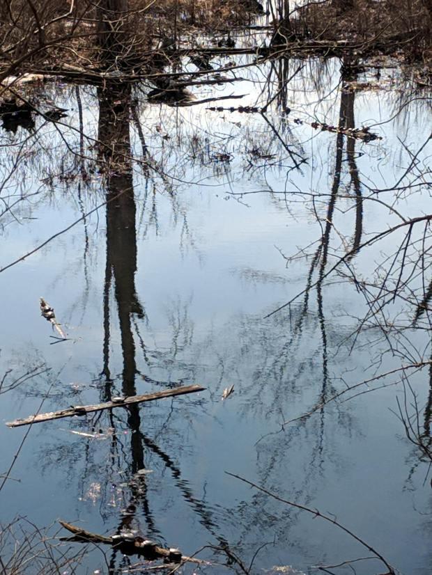 Turtles - Lake Walton - 2019-03-14