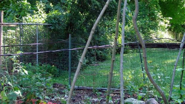 Fallen Utility Pole - garden view