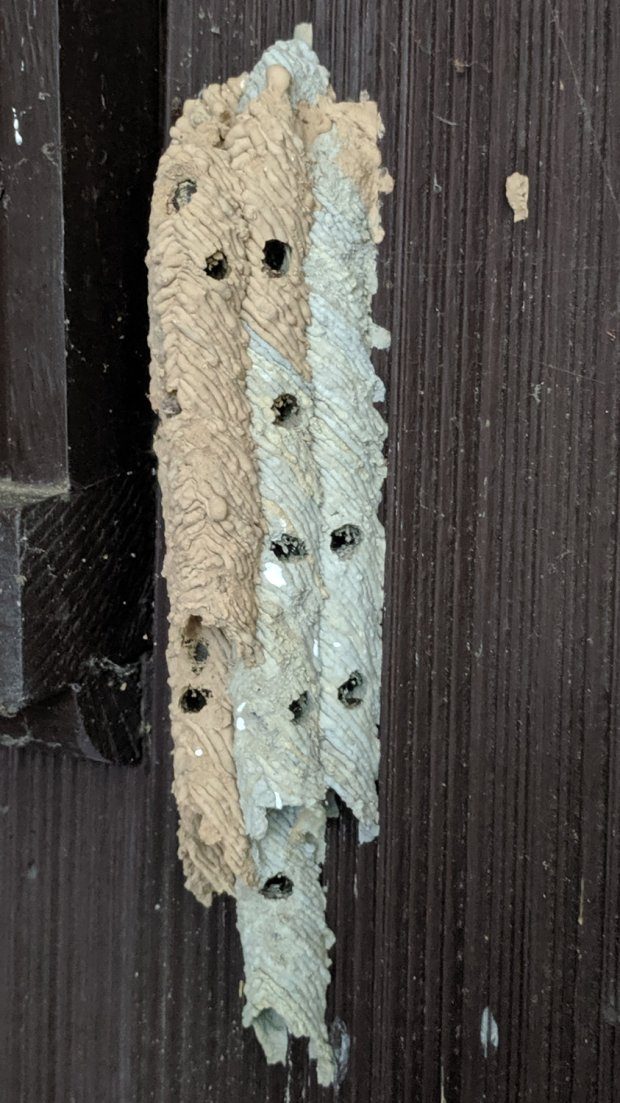 IMG_20190717_172908 - Organ Pipe Mud Dauber Nest - right