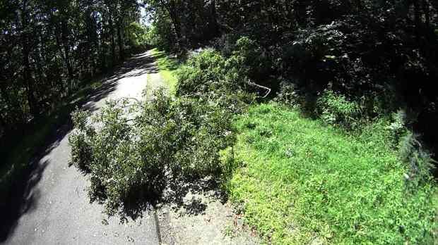 DCRT Fallen Tree - 1 - 2019-08-29