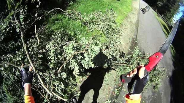 DCRT Fallen Tree - 2 - 2019-08-29