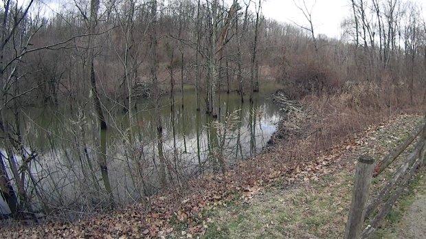 Beaver Lodge and Dam - raised dam - 2020-03-31