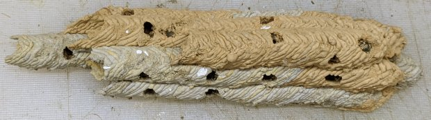 Organ Pipe Wasp Nest - overview