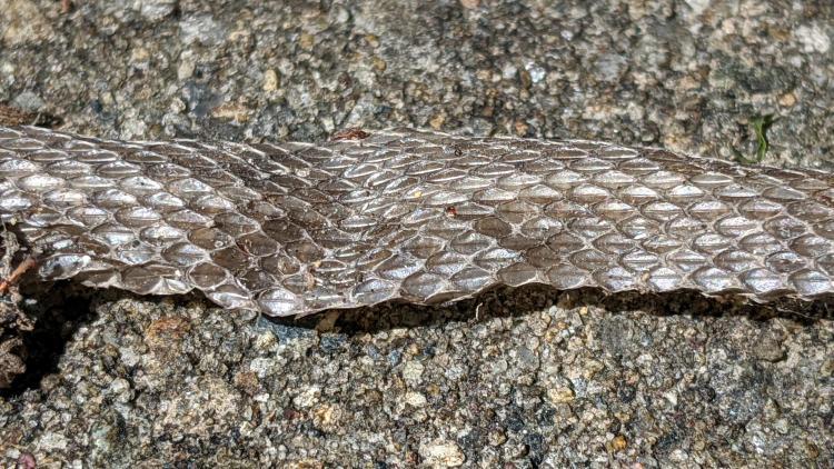Snakeskin - exterior