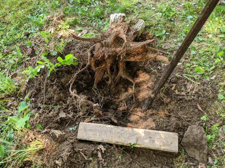 Tree stump - crater