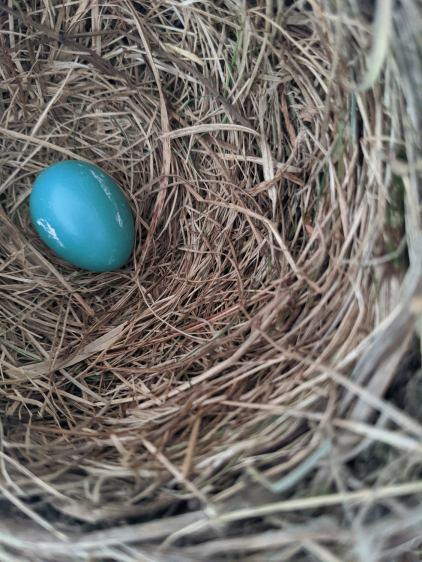 Garage Robin Nest - first egg - 2020-05-28
