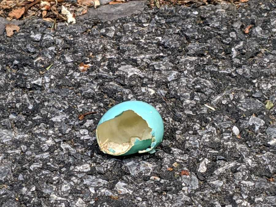 Garage Robin - plundered eggshell