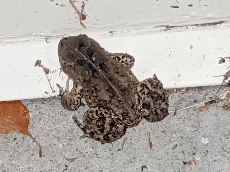 Toad at garage door
