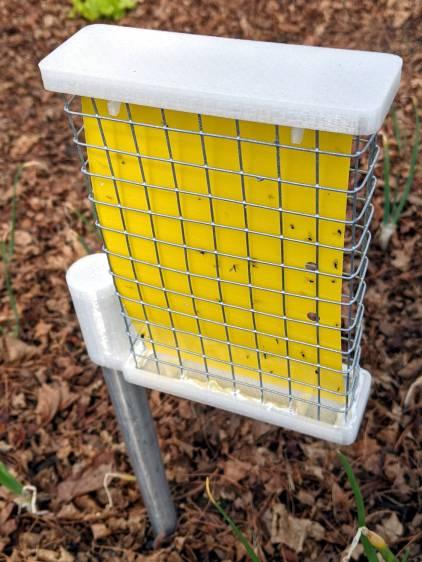Sticky Trap - ski pole installed