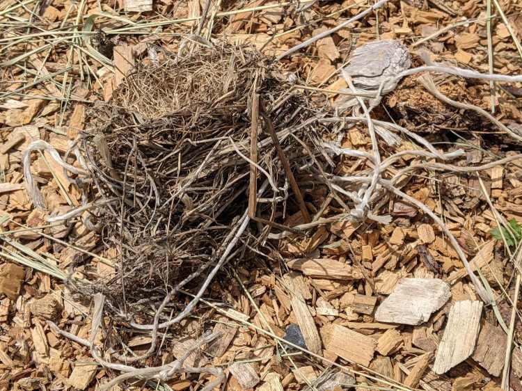 Bird Nest with plastic string - top