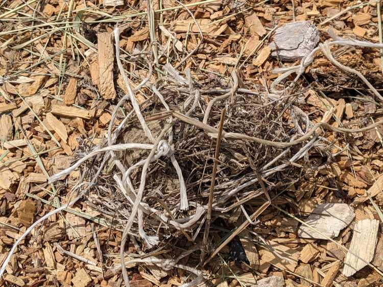 Bird Nest with plastic string - bottom