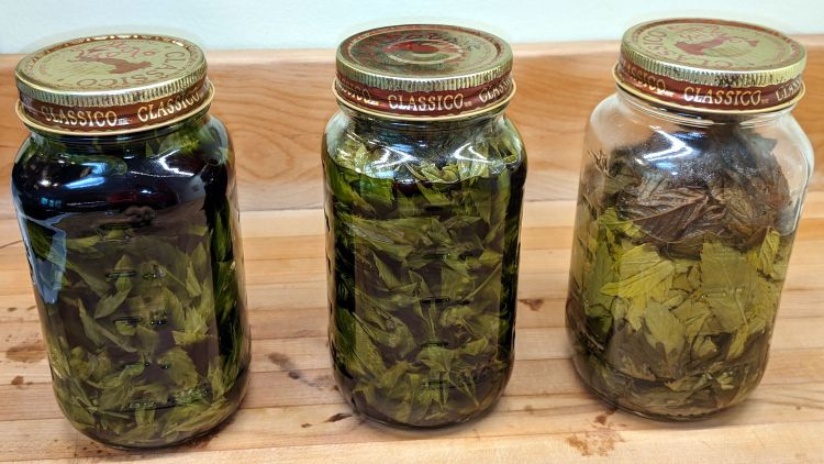 Homebrew mint extract - 2021-06-26