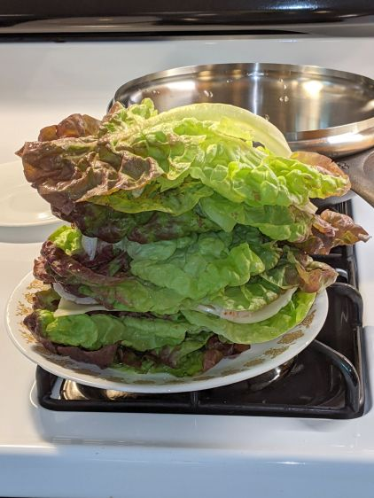 Turkey Sandwich with Excessive Lettuce