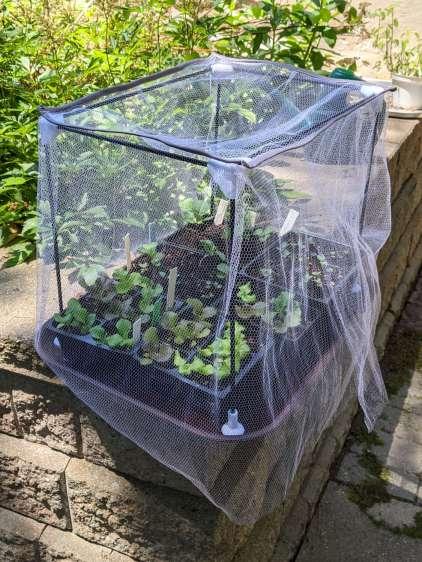 Seedling Mesh Shelter - installed