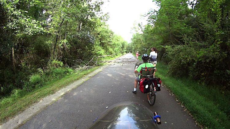 Rail Trail - fallen tree - 2021-09-15